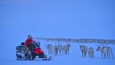 Vi följer familjen Sara när deras renhjord flyttas från vinterbetesområdena på Finnmarksvidda till sommarbetet på Kvaløya i Finnmark.