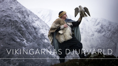 Världens natur: Vikingarnas djurvärld