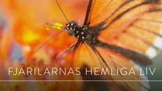 Fjärilarnas hemliga liv.