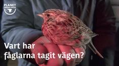 En lång rad fågelarter vi lärt oss älska och ta för givna minskar kraftigt och luften fylls inte längre av deras röster. Men nu är det inte gifterna. Hela landskapet har blivit fågelfientligt.