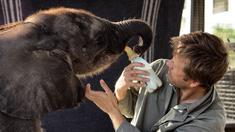 Elefantungen Naledi med Mike Chase.