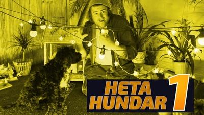 Heta Hundar 1
