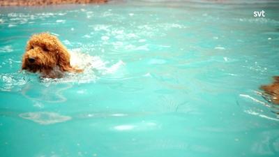 15. Våfflan och poolen