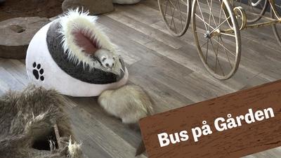 Bus på gården