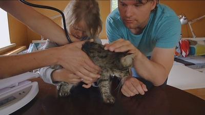 Katter till veterinären!
