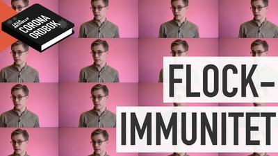 Vad betyder flockimmunitet?