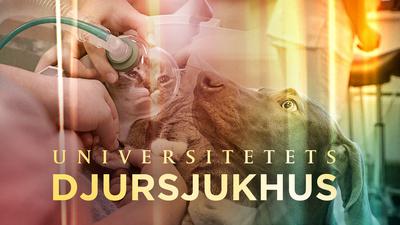 En serie om vardagen på Finlands enda universitetsdjursjukhus, där man tar emot patienter 24 timmar om dygnet, året runt.