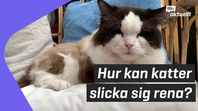 Lilla luskar: Kan katter slicka sig rena?