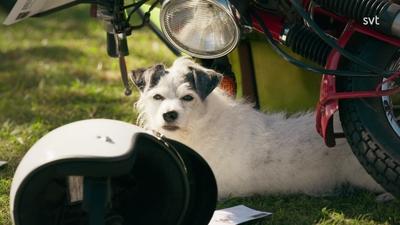 4. Mitt liv som hund