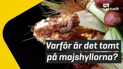 Varför är det majsbrist i Sverige?