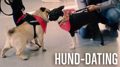Hund-dating