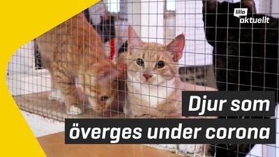 Övergivna husdjur under coronapandemin