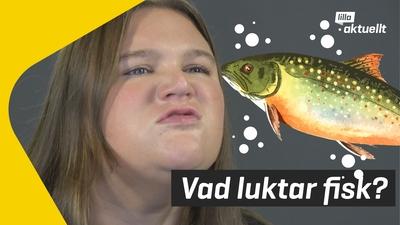 Ny forskning om fiskdoft