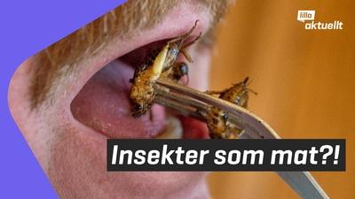 Skulle du kunna äta en gräshoppa?