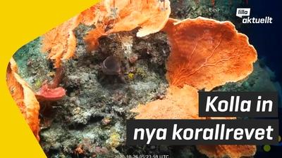 Nytt korallrev upptäckt!