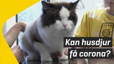 Veterinären svarar: Kan husdjur få coronaviruset?
