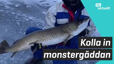 Kolla in monstergäddan!