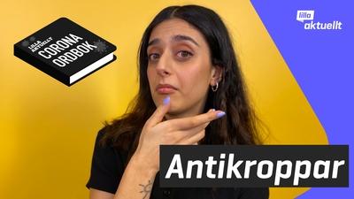 Vad är antikroppar?
