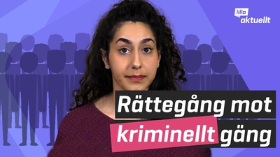 Stor rättegång mot kriminellt gäng i Stockholm