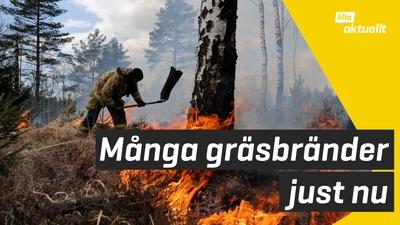 Stor risk för gräsbränder