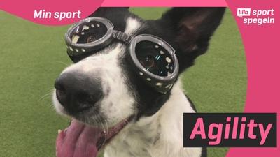 Hunden Ulla hoppas få tävla med glasögon