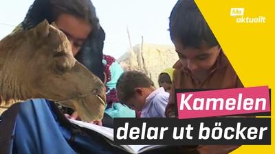 Kamel levererar böcker i Pakistan