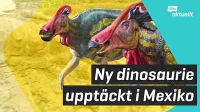 Pratsam dinosaurie upptäckt!