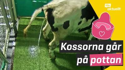 Kor går på pottan?!