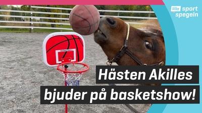 Hästen Akilles älskar sport!