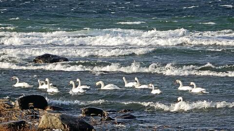 En solig men blåsig dag den 9 december strax norr om Visby.