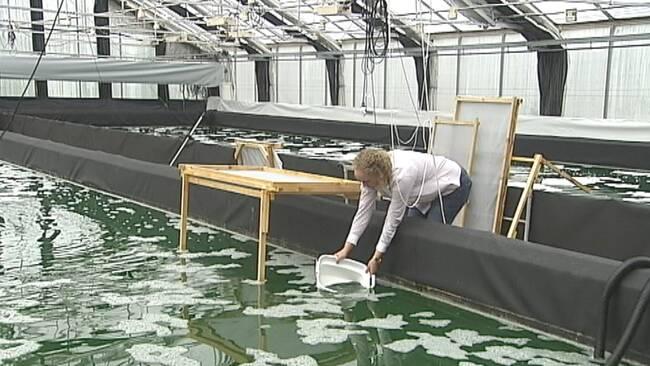 Vattnet sjunker i glafsfjorden
