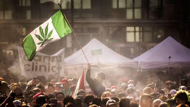 Svaga bevis for cannabis medicinska effekter