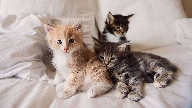 Katter i säng
