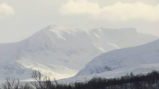 vy mot snöigt fjällmassiv, fjällskog i förgrund