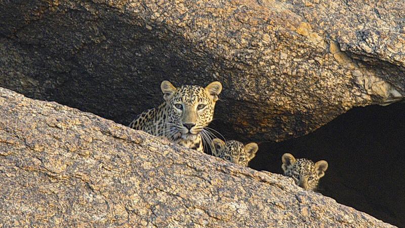 Leopardklippan