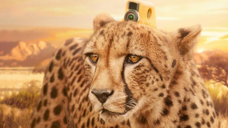 Gepard med kamera, fotokollage