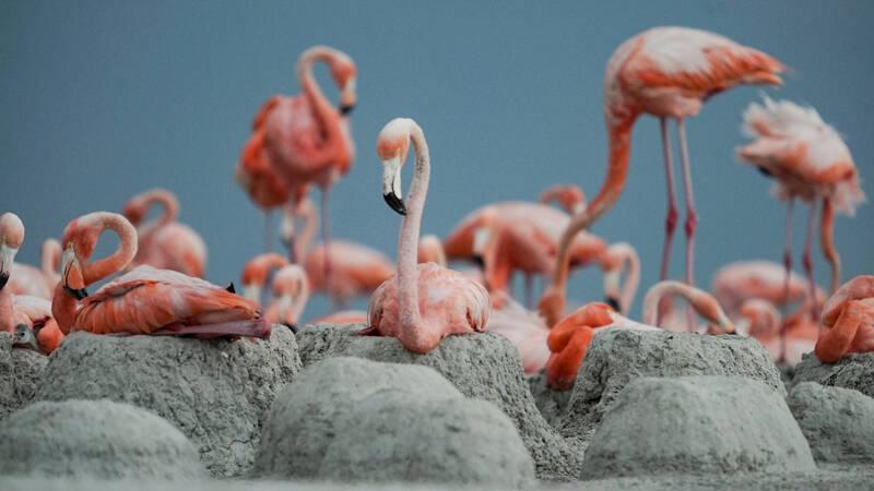 Flamingokoloni - Ria Lagartos