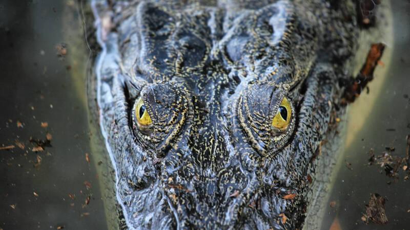 Han kallas Brutus och är en fem meter lång australisk krokodil. Han har just fyllt 50 år och kan se tillbaka på ett händelserikt liv i nationalparken Kakadu, fyllt av strider med främsta rivalen, hans egen bror. Men också en händelse som förändrade allt, när han angrep en människa.