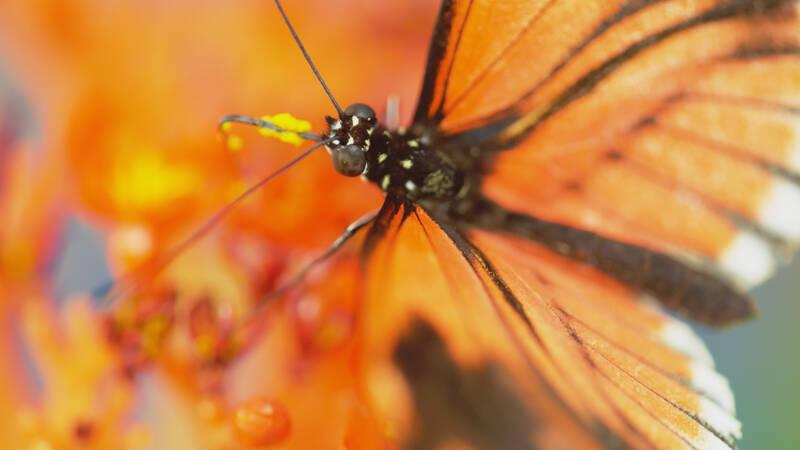 Vi älskar fjärilarna för deras skönhet och sjunger med i Bellmans Fjäril'n vingad syns på Haga. Ändå är det så mycket i deras liv vi inte förstår. Det mesta handlar om sex och lurendrejeri, skönheten till trots.