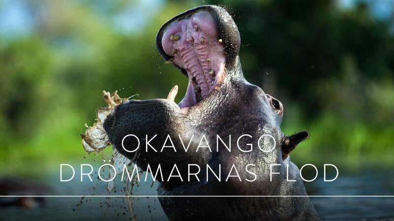 Världens natur: Okavango - drömmarnas flod.