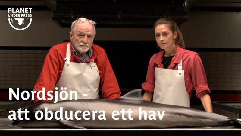 George McGavin och Lonneke IJsseldijk.