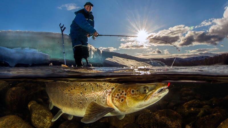 Naturfotografen Audun Rikardsen har gjort sig känd för sina spektakulära bilder av livet både ovanför och under havsytan i den arktiska havsmiljön i hemtrakterna i nordligaste Norge. Här är en av hans bilder som föreställer hans far Odd Rikardsen som fiskar lax i Alta.