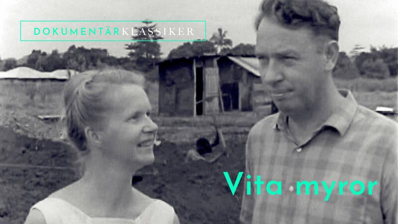 Vita myror