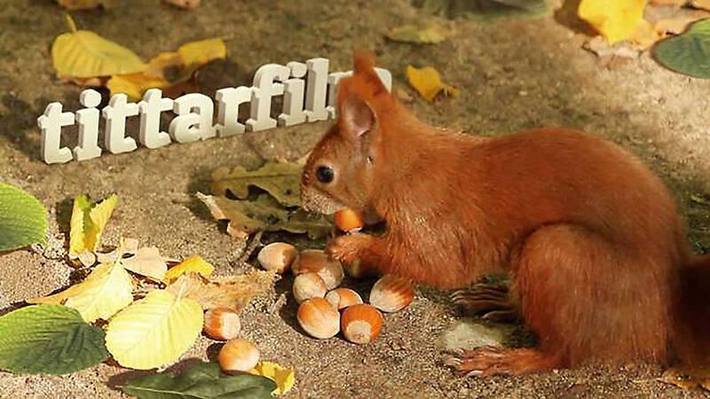 En ekorre knaprar på nötter