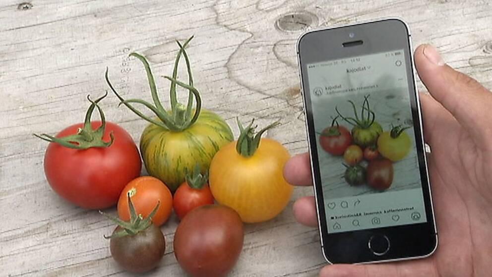 Nyskördade tomater beställs via mobilen