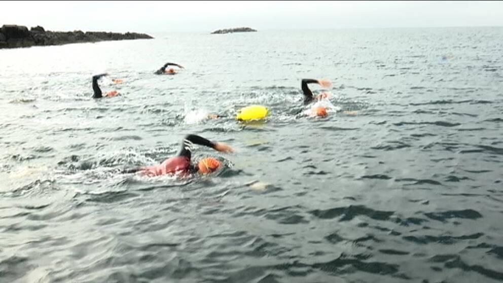 fyra simmare i badmössa och våtdräkt simmar på öppet hav med några kobbar i bakgrunden