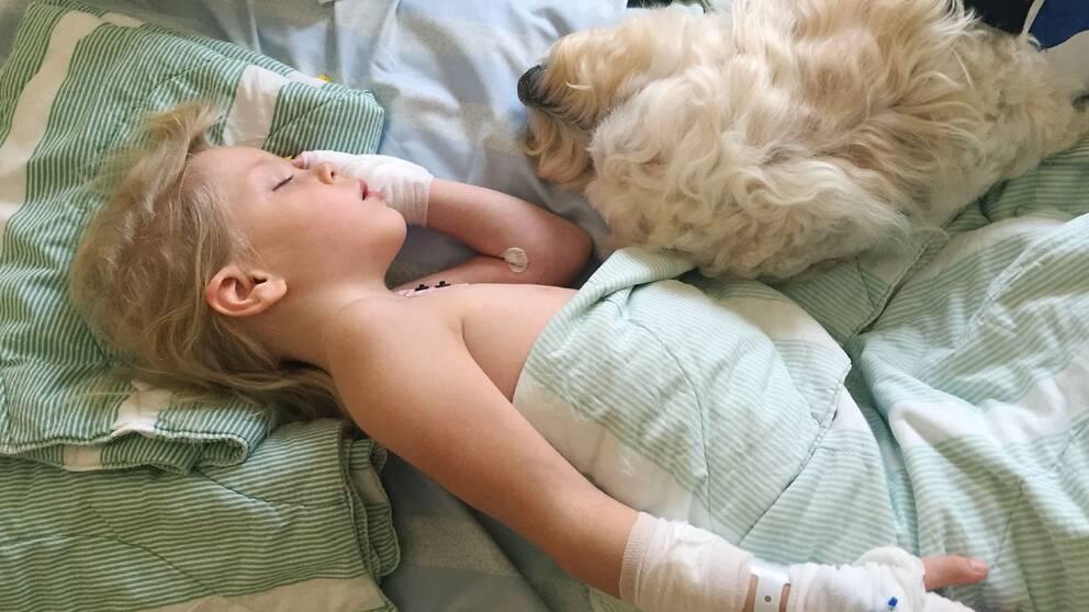 Vårdhunden Livia besöker patienten Astrid Remb på Akademiska sjukhuset vårdhund