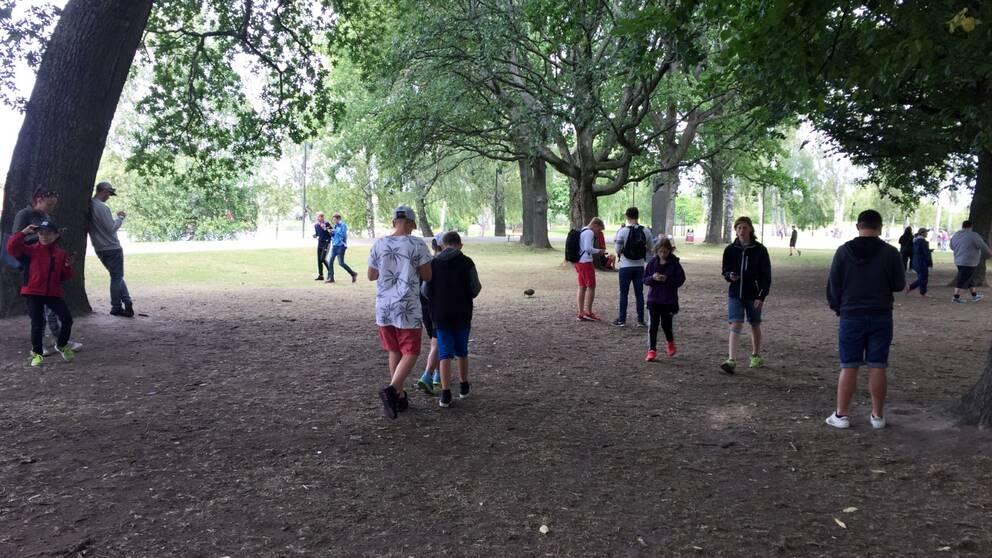 Många Pokémonspelande människor på Sandgrundsudden i Karlstad där gräsmattan är brun.