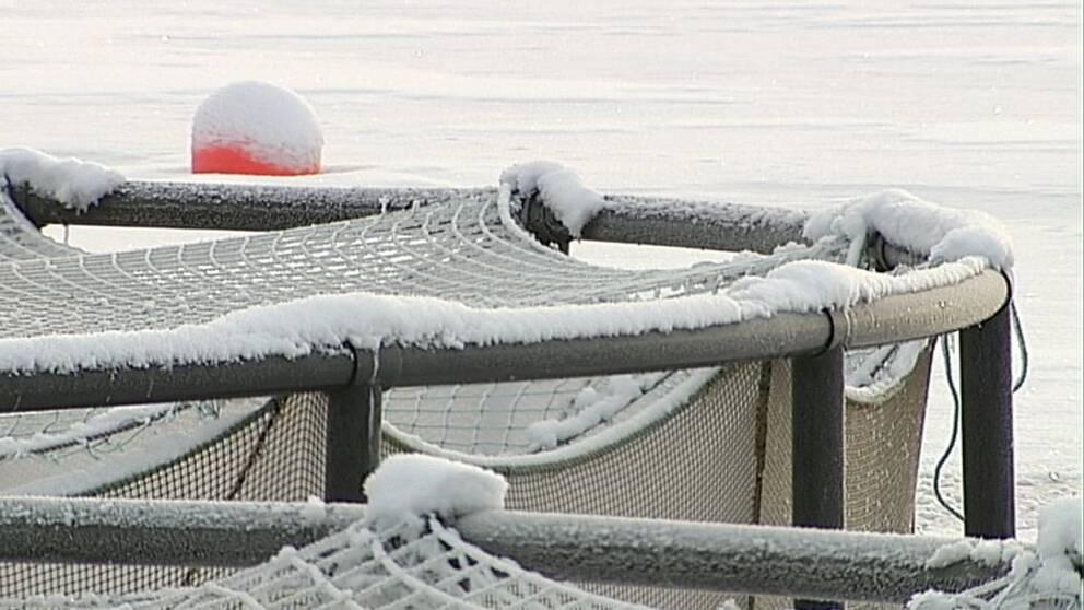 Fiskodling vinter