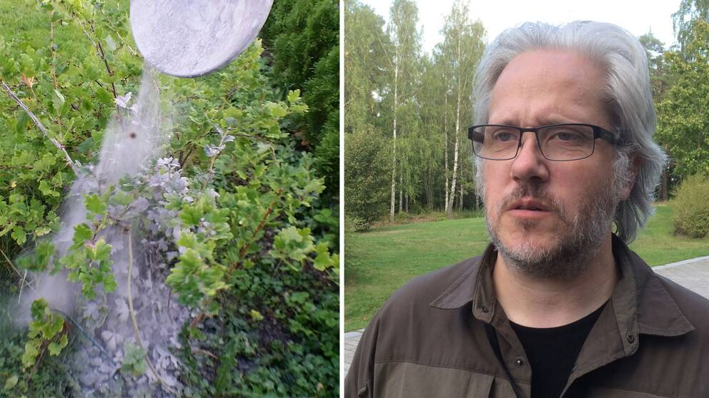Aska i trädgården och Mattias Bäckström i montage